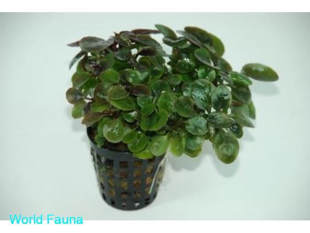 Аквариумные Растения опт и розница
