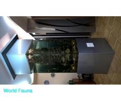 Отдам в хорошие руки рифовый аквариум+дасциллус.в Харькове.